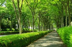 緑地管理写真